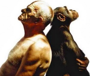 macaco-homem-psicologia-comportamento-evolucionista