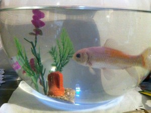 boccia pesce rosso