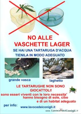 Tartarughe domestiche quello che si deve sapere for Tartarughe di acqua dolce