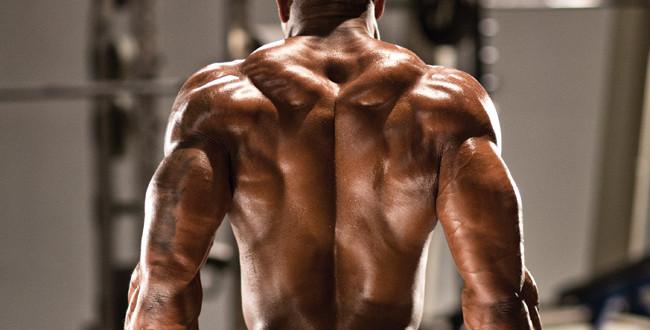 La schiena: trapezi e lo spessore