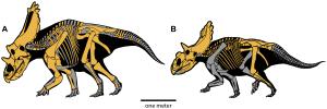 Regaliceratops peterhewsi