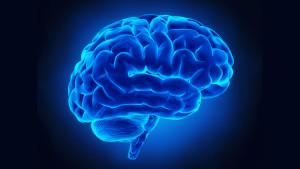 come_funziona_cervello
