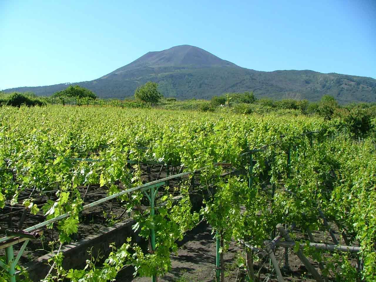 Lacryma christi la leggenda del vino lacooltura for Fertile soil 07
