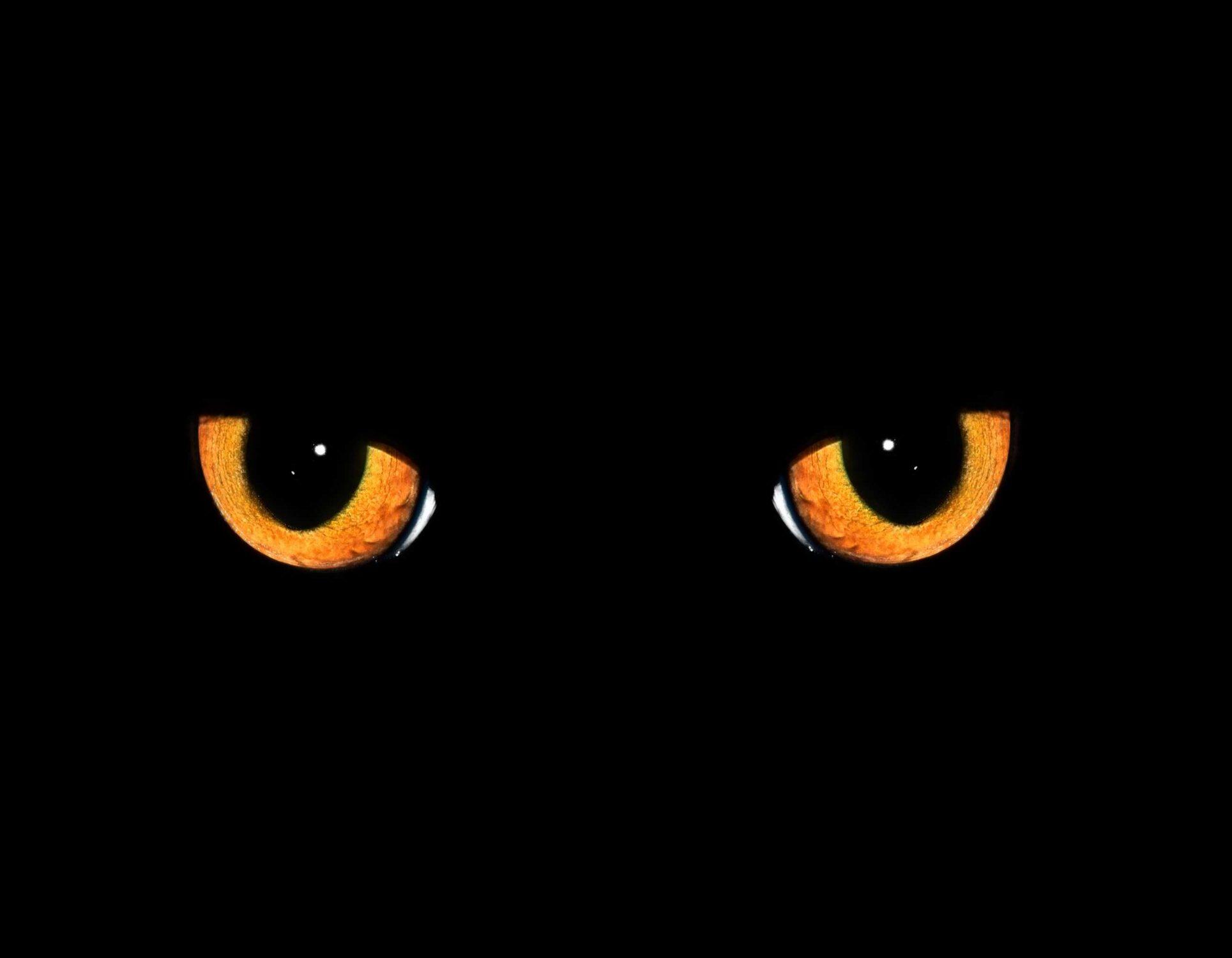il gatto nero Poe