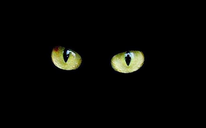 Gatto Nero E Superstizione Storia Di Una Credenza Popolare Lacooltura