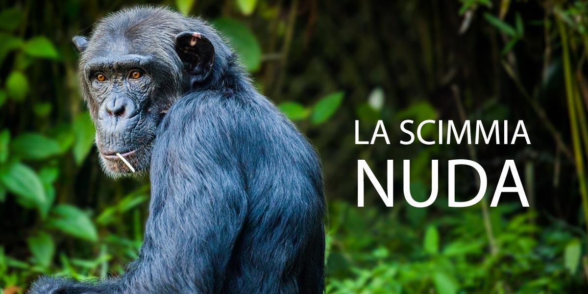 La scimmia nuda Desmond Morris