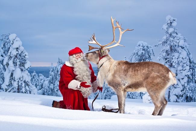 Renne Di Babbo Natale Nomi.Renna Dalla Zoologia Alla Tradizione Natalizia Lacooltura