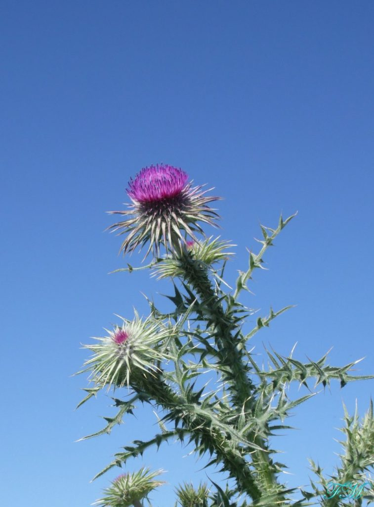 fiori nazionali