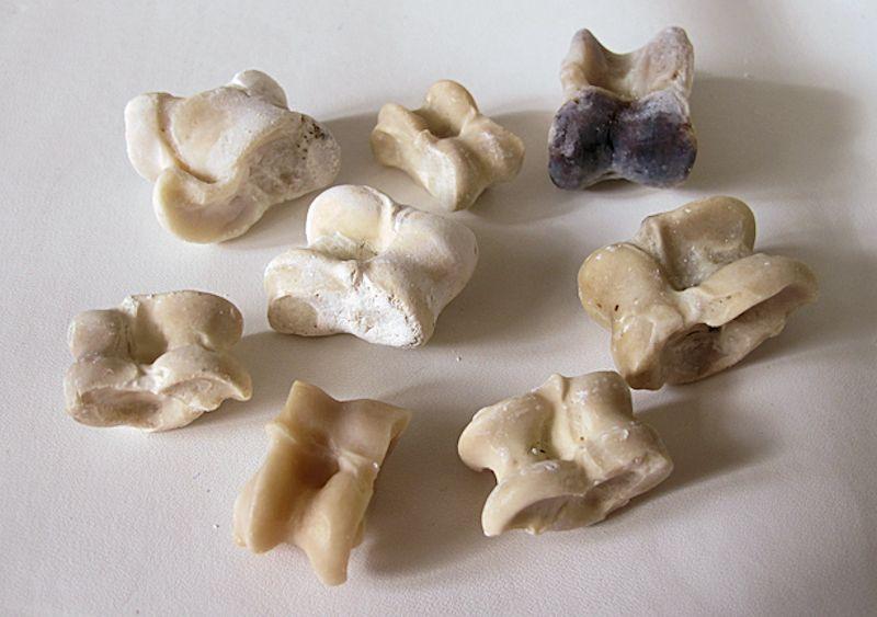 Astragali in osso utilizzati per giocare