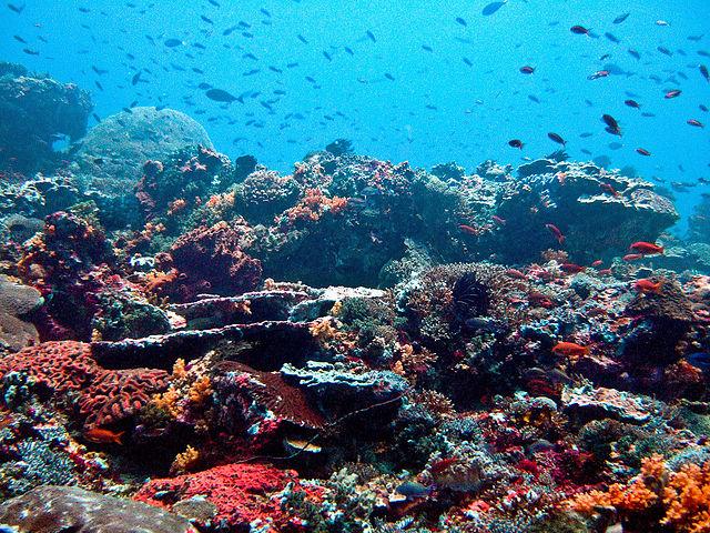 Reef in cui i coralli formano un habitat ideale per numerose specie marine