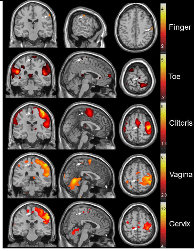 aree cerebrali orgasmo masturbazione