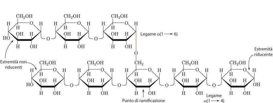 glicogenosi